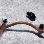 Köcherfliege und Käfer